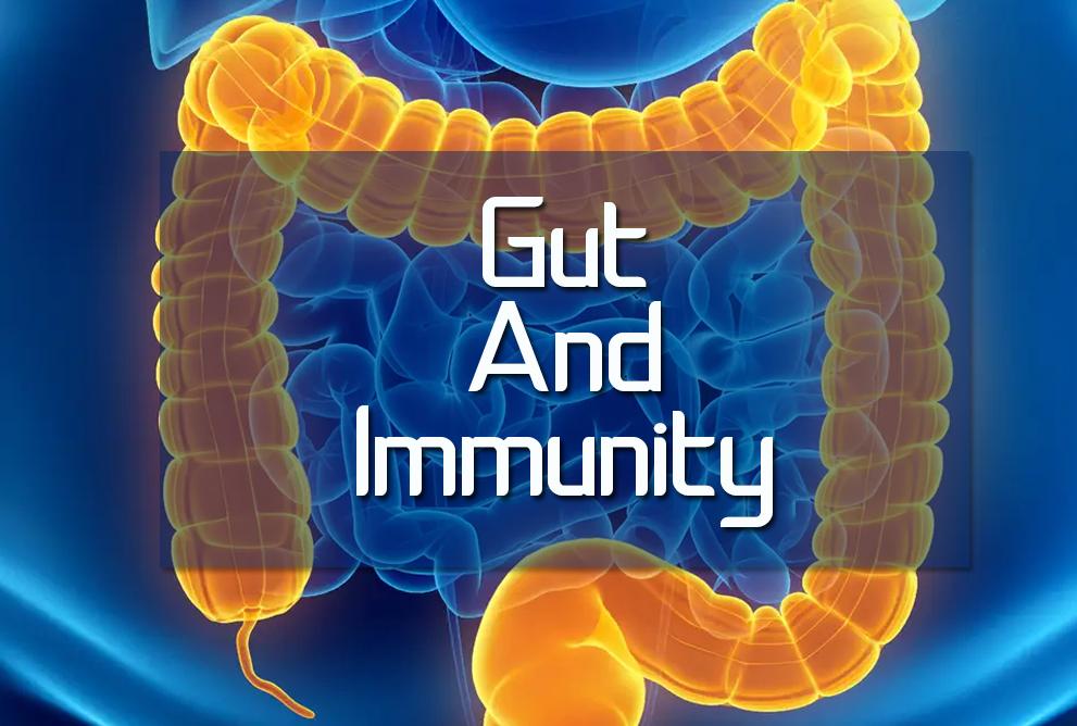 gut and immunity